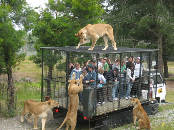 Picture of the Day: Reverse Zoo