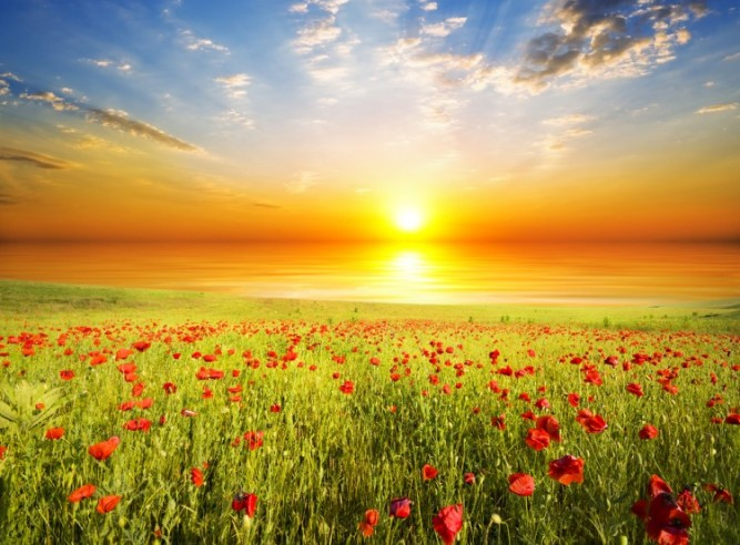 sunrise and flowers