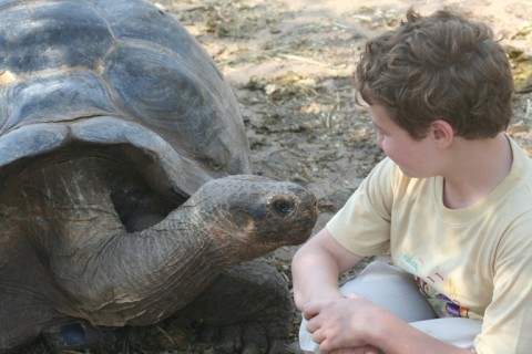 tortoise and a boy