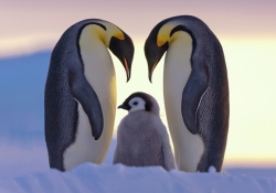 penguins and family values