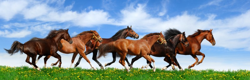 Image result for solomon's horses