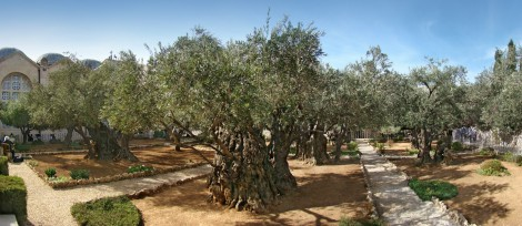 The Garden of Gethsemane — From Wikipedia, the free encyclopedia