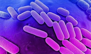 Report finds antibiotic resistance rife across world