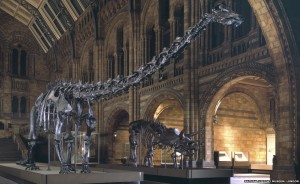 It feels like Dippy the Diplodocus has always guarded the entrance, but in fact it only took up position in the 1970s