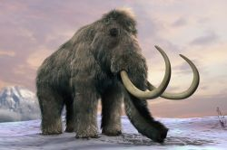 An artist's representation of wooly mammoth
