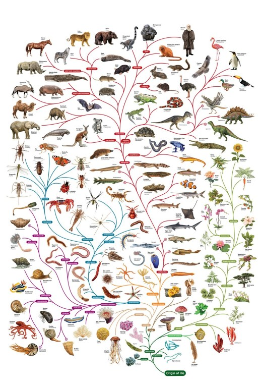 Charles Darwin tree of life, linking all life forms