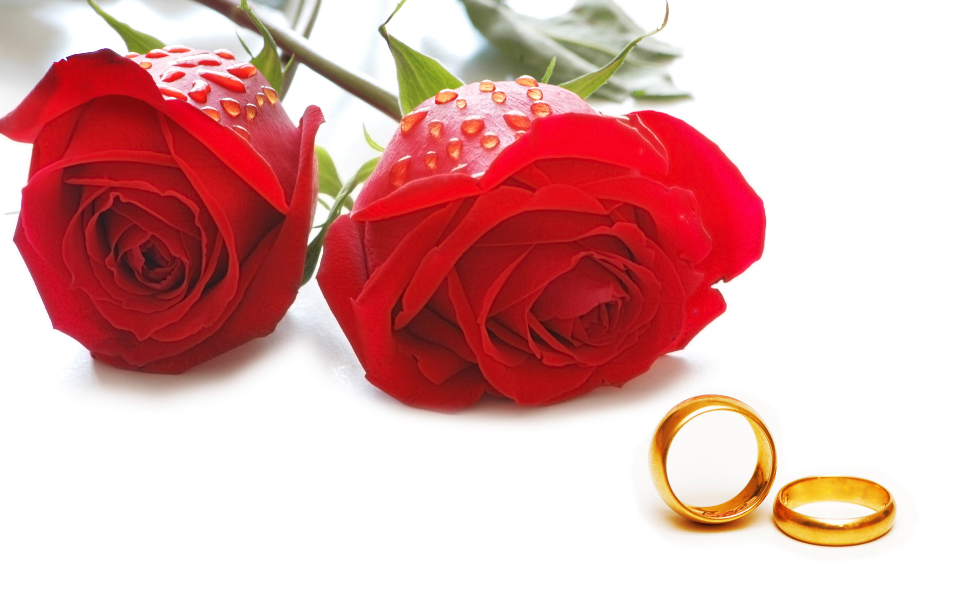 Cousin Marriage – Why? – Why Not? – The Muslim Times