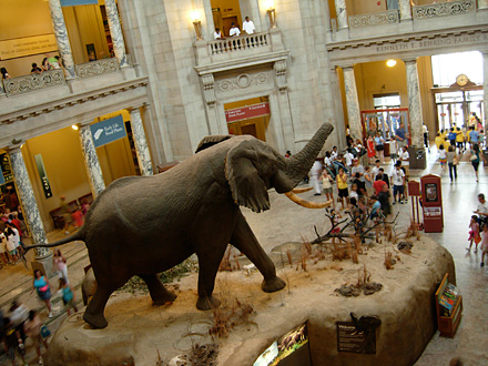 An 8-ton African elephant named Henry, in the National Museum of Natural History, located on the National Mall, in Washington DC