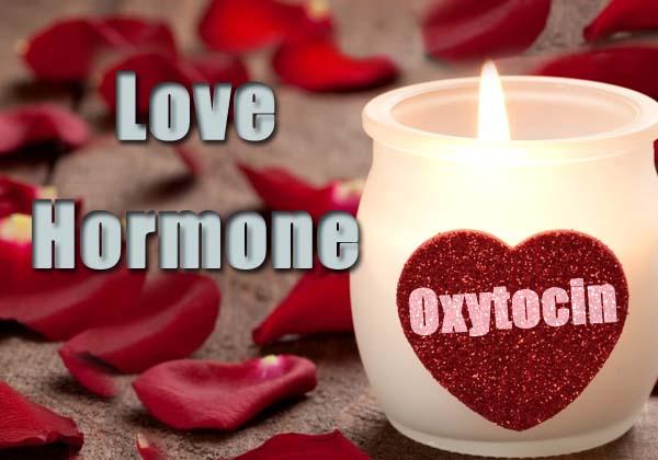 Love-Hormone