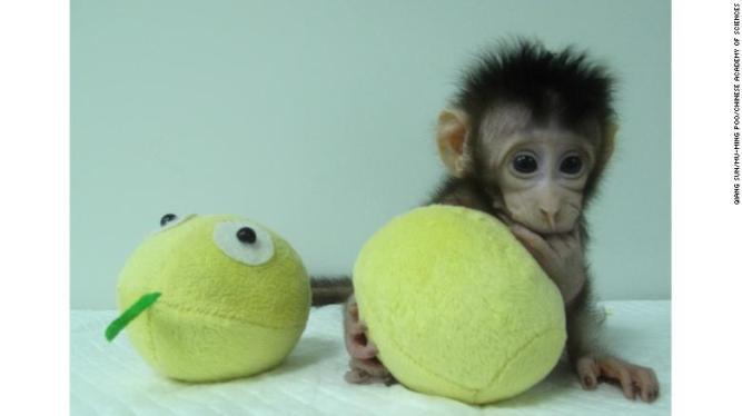 180122113849-01-monkey-clones-hua-hua-exlarge-169
