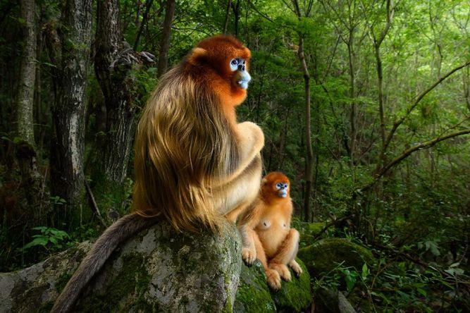 monkeys beautiful