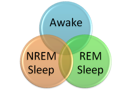 rem and nrem sleep