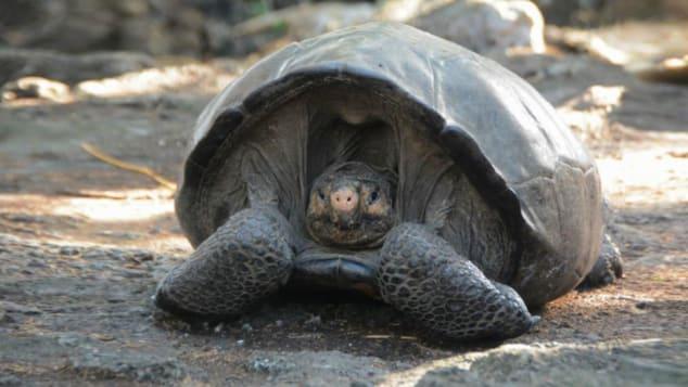 http___cdn.cnn.com_cnnnext_dam_assets_190221120447-galapagos-giant-tortoise