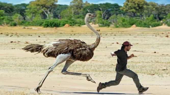Ostrich and a man