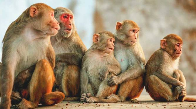 monkeys-1296x728-header