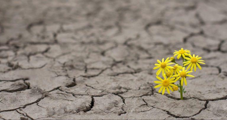 flower-hope-earth-climate-change-e1493332891171